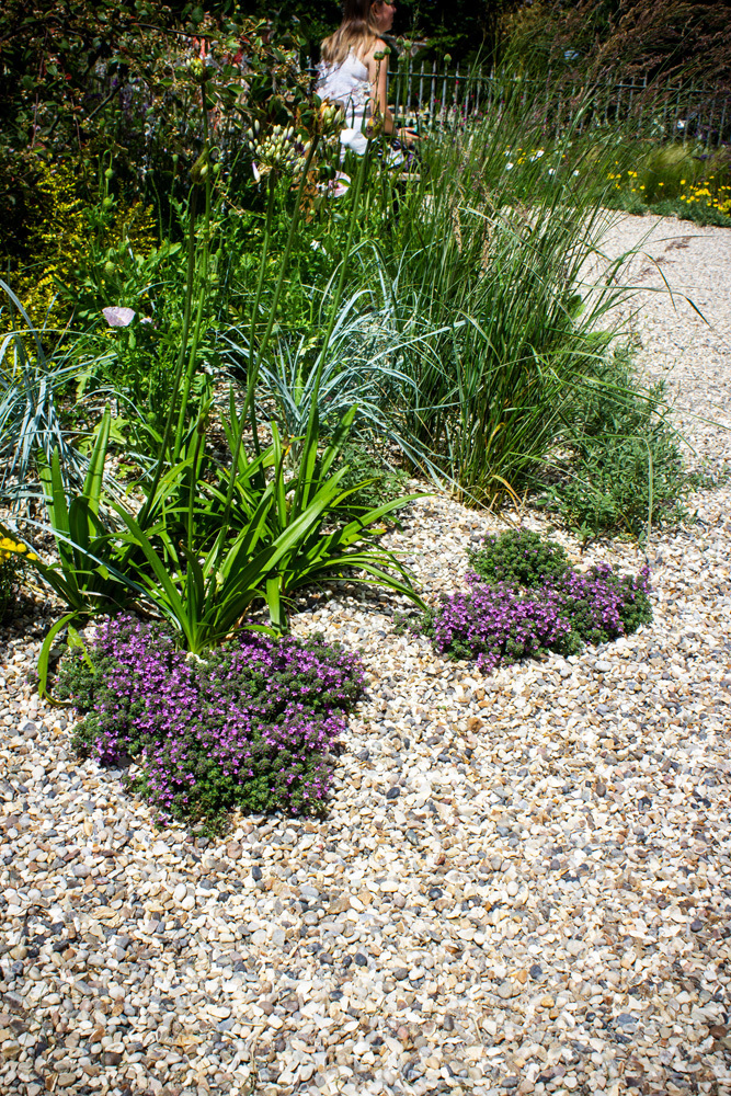 Beth Chatto: The Drought Resistant Garden