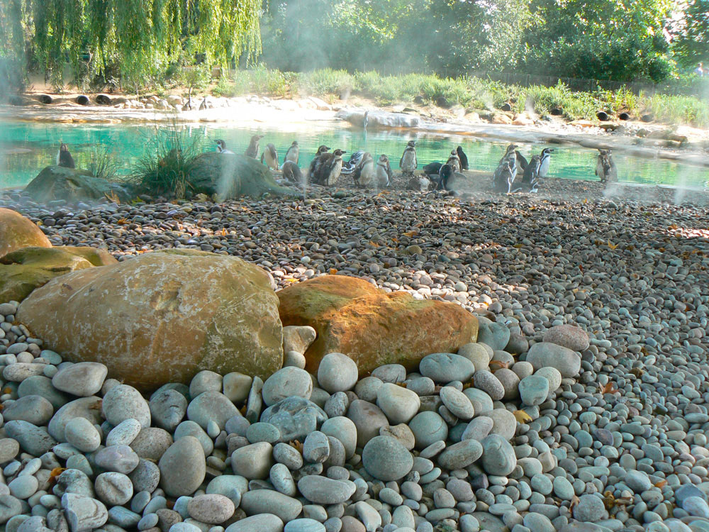 From Amersham Building Site to London Zoo's Penguin Home
